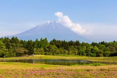 Shibazakura flower field with Mount Fuji in the background, Japan Stock Photography
