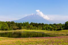 Shibazakura flower field with Mount Fuji san in the background, Japan.  Stock Photo