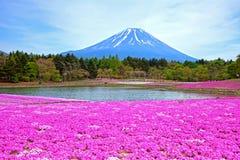 Shibazakurafestival in Japan royalty-vrije stock afbeeldingen