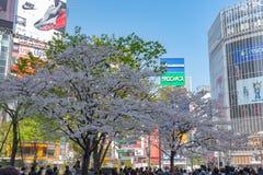 Shibuya, Τόκιο, Ιαπωνία - 29 Μαρτίου 2019: Άνθη κερασιών σε Shibuya, Τόκιο, Ιαπωνία στοκ φωτογραφία με δικαίωμα ελεύθερης χρήσης