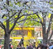 Shibuya, токио, Япония - 29-ое марта 2020: Вишневые цвета на Shibuya, токио, Японии стоковое фото rf