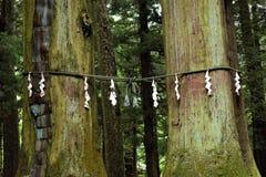 Shide op Shimenawa rond een Yorishiro-boom bij het Heiligdom van Kawaguchi Asama Shinto, Fujikawaguchiko, Japan royalty-vrije stock afbeelding