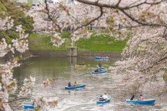 Shidorigafuji Τόκιο πάρκων ανθών κερασιών την άνοιξη Στοκ Φωτογραφίες