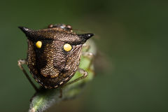 Shield Bug back with smiling face Royalty Free Stock Image