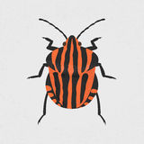 Shield bug Stock Photos