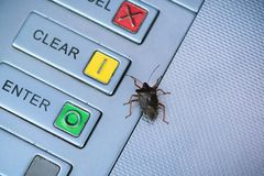 Bug at the Cashpoint, Rottingdean, East Sussex, UK stock photo
