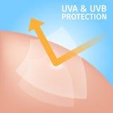 Shield uv protection for skin , uva uvb Stock Image