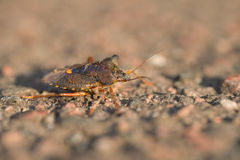 Shieldbug in the sun. Macro of a shieldbug in the sun standing on a stone surface Stock Photography