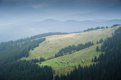 Shielings on a subalpine meadow on a slope of a mountain in the Carpathian mountains Stock Photography