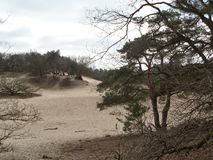 Shifting sand dunes. In the Netherlands Stock Photo