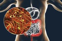 Shigella a forma di bastoncino dei batteri che causano la shighellosi o la dissenteria di infezione alimentare illustrazione vettoriale