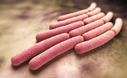 Shigella sonnei bacteria Stock Photography