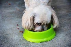 Shih Tzu ест сухую собачью еду Стоковые Фотографии RF