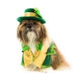 Shih Tzu Celebrates St. Patrick Tag Stockbilder