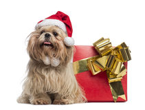 Shih tzu with christmas hat, sitting next to a present box Royalty Free Stock Photography