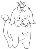 Shih tzu dog coloring page Stock Photo