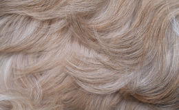 Shih tzu dog hair Stock Image