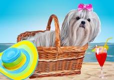 Shih tzu dog vacation Stock Image
