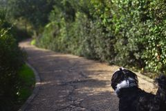 Free Shih Tzu Dog Walking The Trail Stock Photos - 134580733