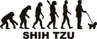 Shih Tzu ewolucja ilustracji