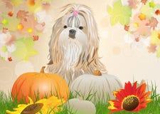 Shih Tzu Hund Stockbilder