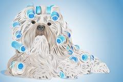 Shih Tzu Hund Lizenzfreies Stockbild
