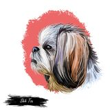 Shih Tzu lap dog toy pet digital art. Small Chrysanthemum breed watercolor portrait closeup, hand drawn muzzle of canine vector illustration