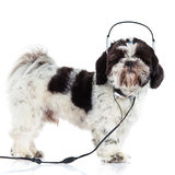 Shih-tzu lokalisiert auf weißem Hintergrundhund und -kopfhörer lizenzfreies stockbild