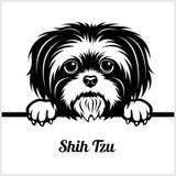 Shih Tzu - mirando a escondidas perros - - cabeza de la cara de la raza aislada en blanco libre illustration