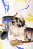 Shih Tzu and Paint Cans. A little Shih Tzu puppy sits between colorful paint cans and brush against a splattered backdrop royalty free stock images