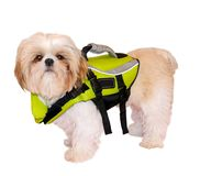 Shih Tzu Puppy In A Life Jacket. On a white background royalty free stock photos