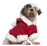 Shih Tzu s'usant l'équipement de Santa, 12 et une moitié Image stock