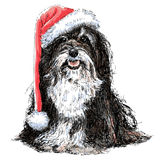 Shih Tzu. With santa claus hat hand drawn vector , use for christmas background Royalty Free Stock Photo