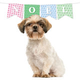 Shih tzu sitting, isolated on white with christmas banner Stock Images