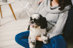 Shih Tzu sitting with people, a dog and a family,. Hands hugging a dog Stock Images
