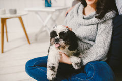 Shih Tzu sitting with people, a dog and a family,. Hands hugging a dog Royalty Free Stock Photo