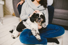 Shih Tzu sitting with people, a dog and a family,. Hands hugging a dog stock photo