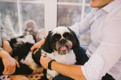 Shih Tzu sitting with people, a dog and a family, stock photos