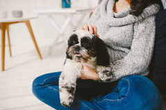 Shih Tzu sitting with people, a dog and a family,. Hands hugging a dog Royalty Free Stock Images