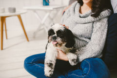 Shih Tzu sitting with people, a dog and a family, Royalty Free Stock Images