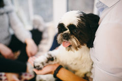 Shih Tzu sitting with people, a dog and a family, Stock Images