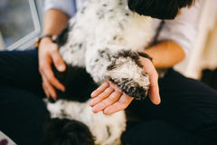 Shih Tzu sitting with people, a dog and a family, Stock Photography