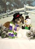 Shih Tzu and Snowman Stock Photos