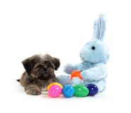 Shih Tzu and stuffed bunny. A cute shih tzu puppy with an stuffed Easter bunny and eggs on white background Stock Images