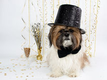 A Shih Tzu in a Top Hat Celebrates New Year's Eve royalty free stock images