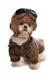 Shih tzu wearing a pilots costume Stock Photo