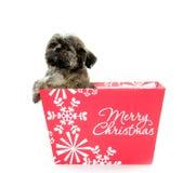 Shih Tzu Welpe im Weihnachtskasten Lizenzfreie Stockbilder