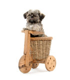 Shih Tzu and wooden trike Royalty Free Stock Photos