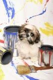 Shih Tzu y latas de la pintura Imágenes de archivo libres de regalías