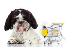Shih tzu z zakupy trolly odizolowywającym na białym tło psie zdjęcie royalty free